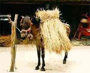 Taishu Horse